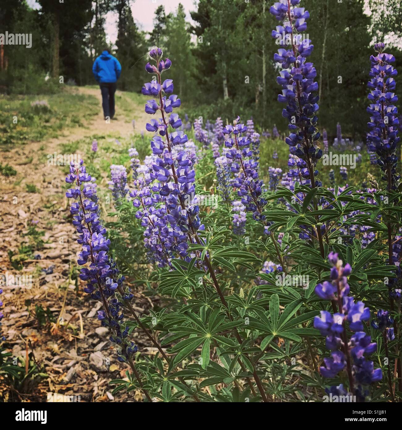 Walks, talks, and purple flowers - Stock Image