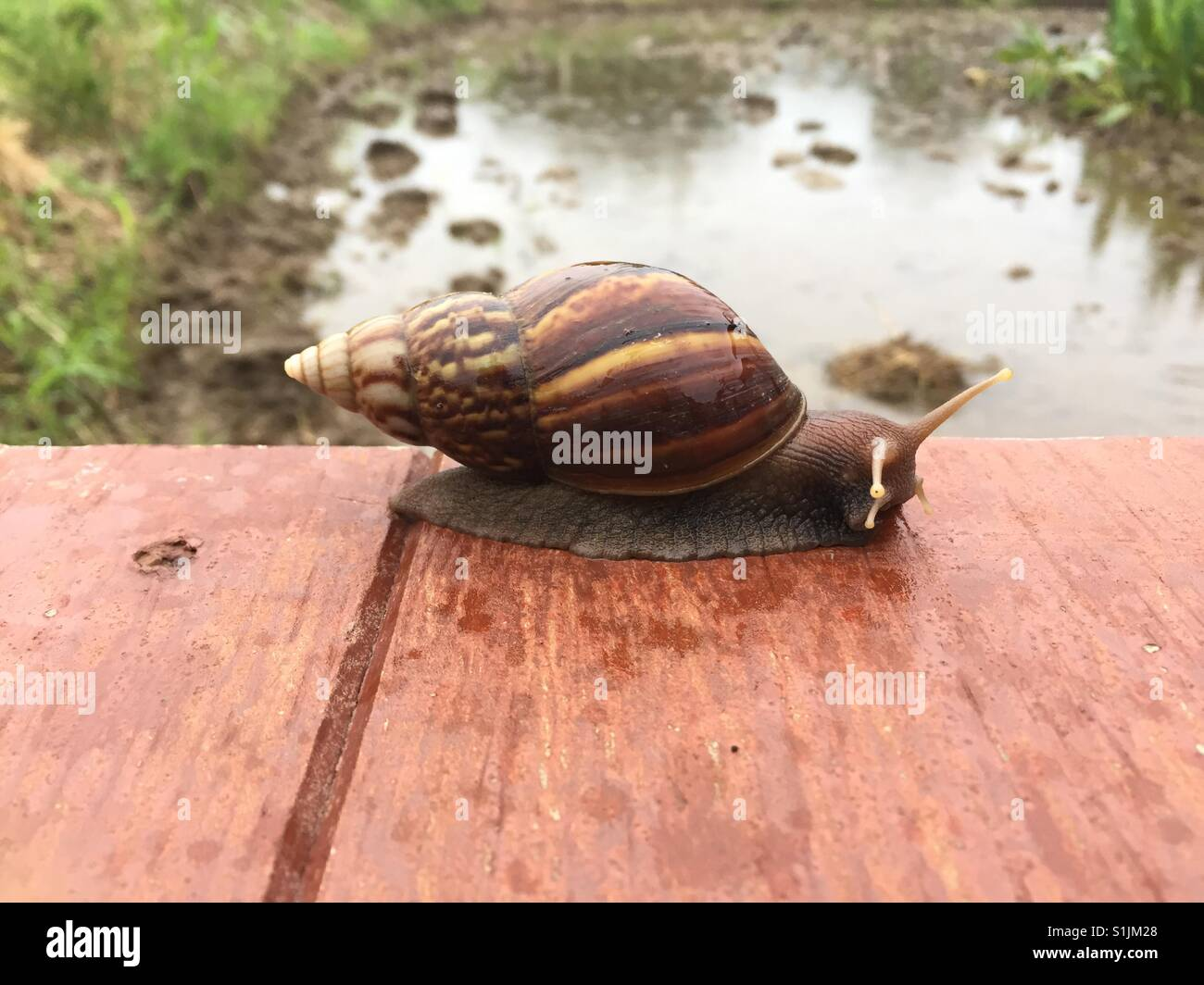 Snail with slow life Stock Photo