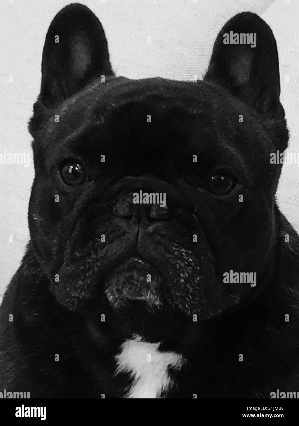 Batdog - Stock Image