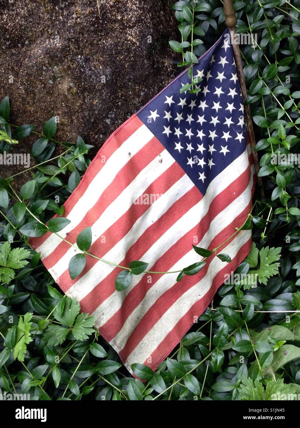 Well-worn American flag being overtaken by vines and foliage - Stock Image
