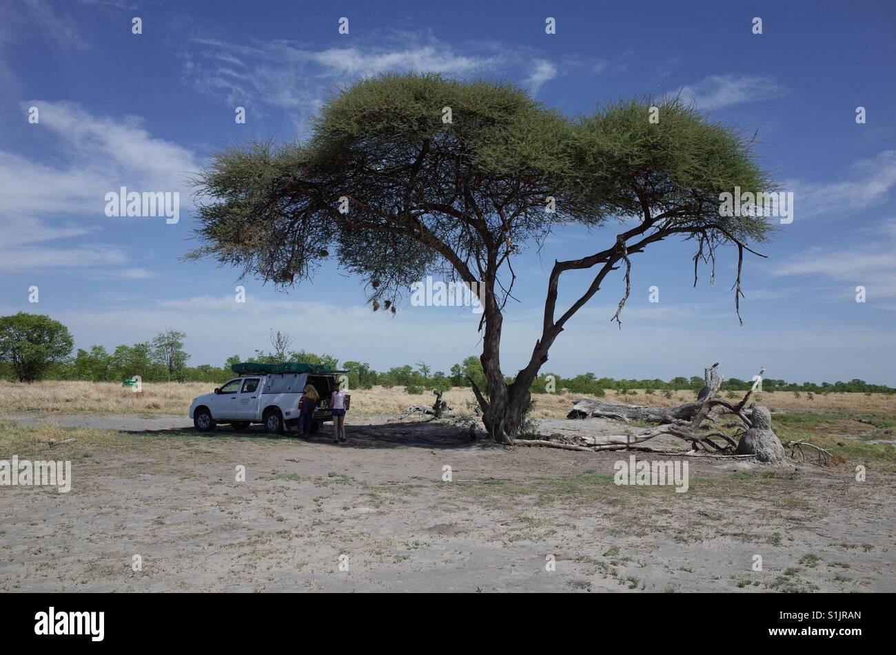 Africa safari - Stock Image