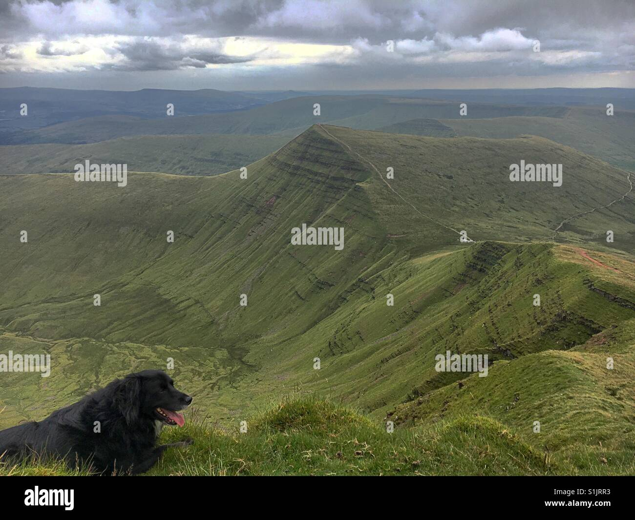 Walking Your Dog In Brecon Beacons