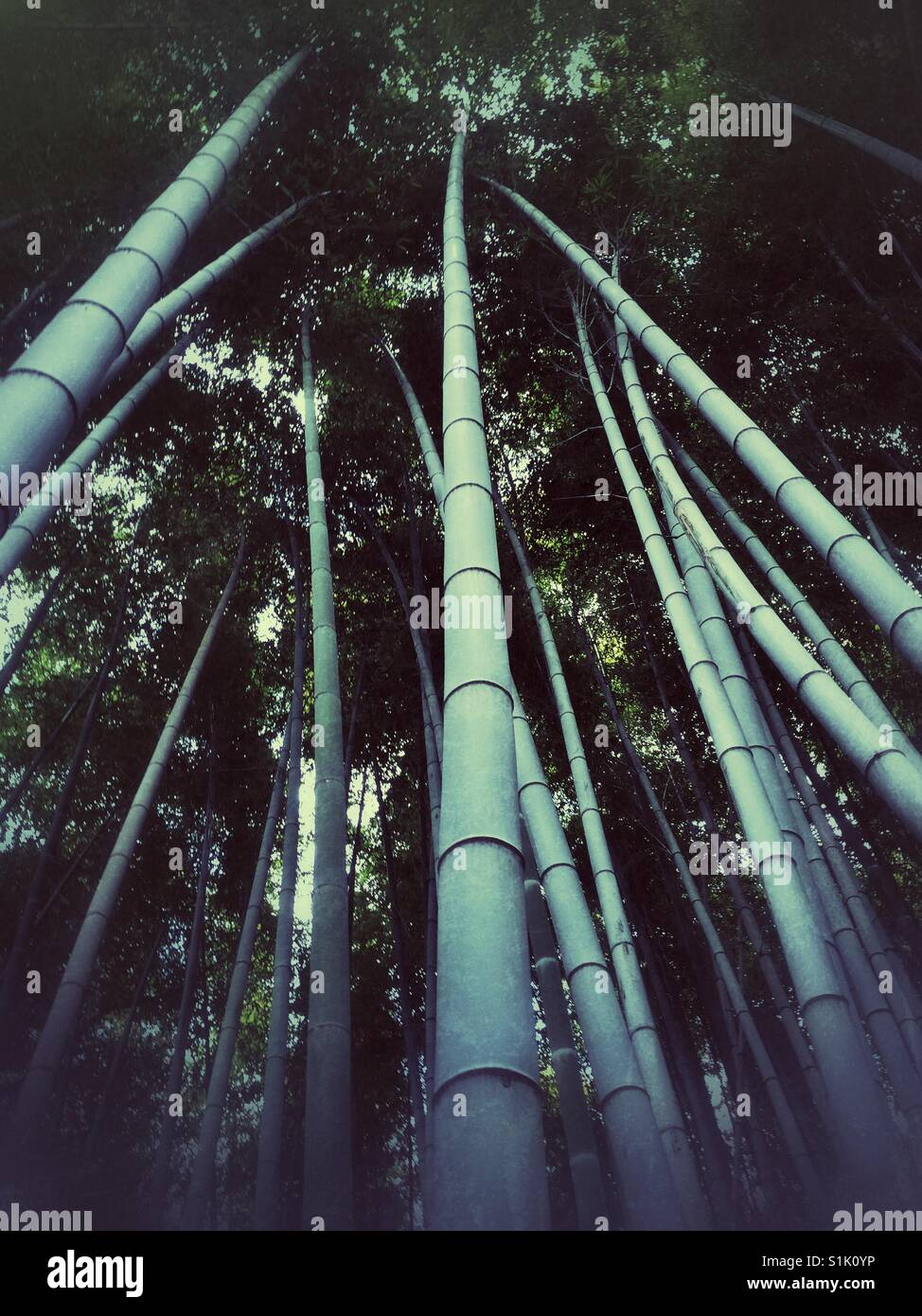 Mysterious bamboo forest in Kyoto - Stock Image