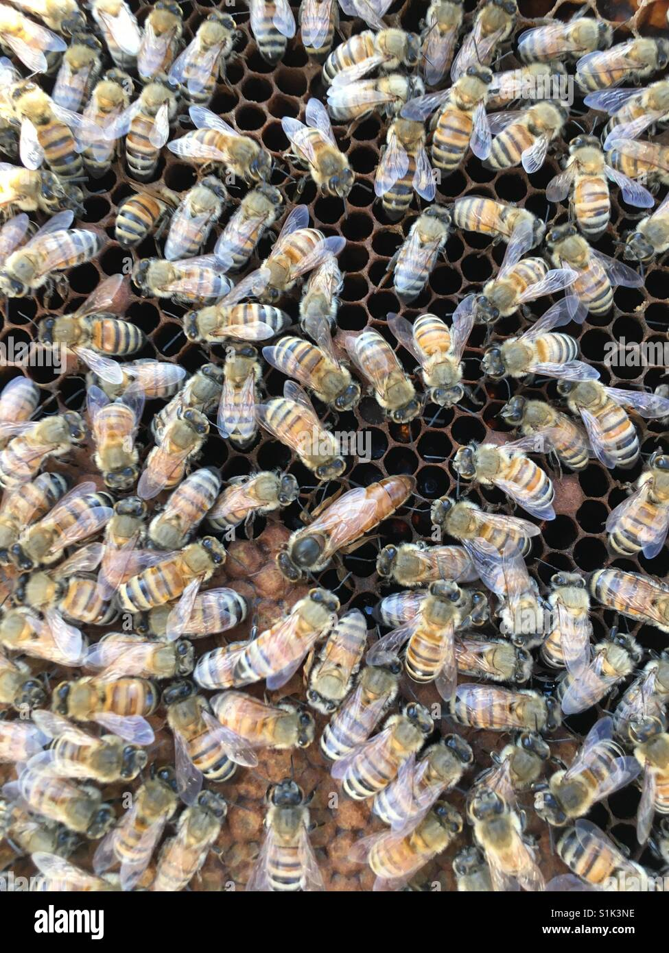 A beehive with a photo of a queen bee in the center. - Stock Image