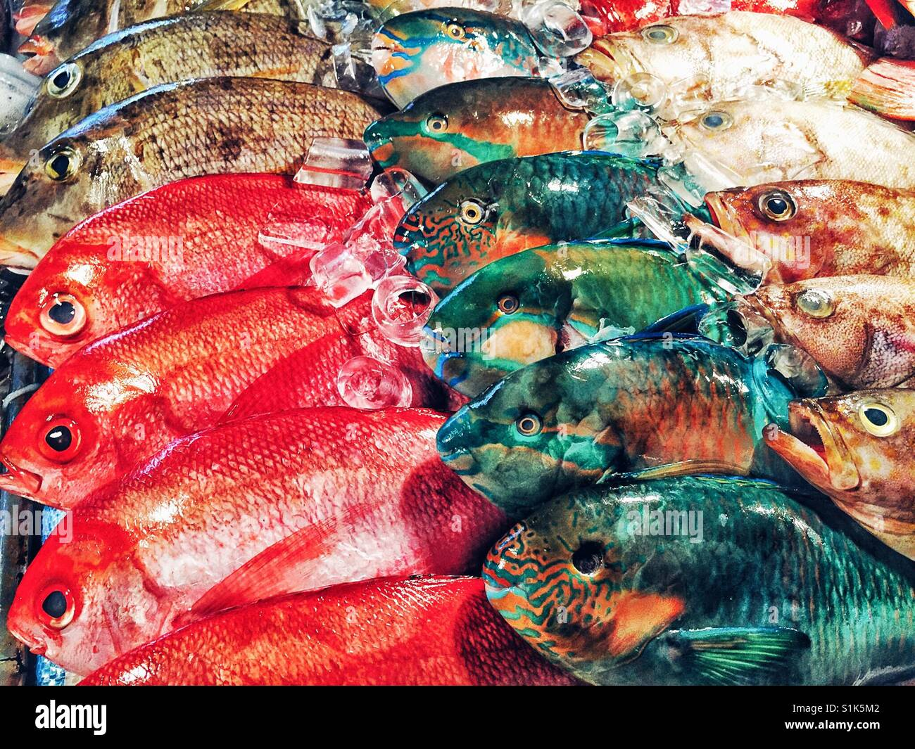 Brightly Colored Fish Stock Photos & Brightly Colored Fish Stock ...