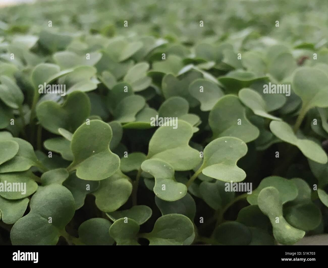 hojas, naturaleza, artístico, textura, leaves, nature, artistic, green, verde, texture, plants, plantas, cosecha, - Stock Image