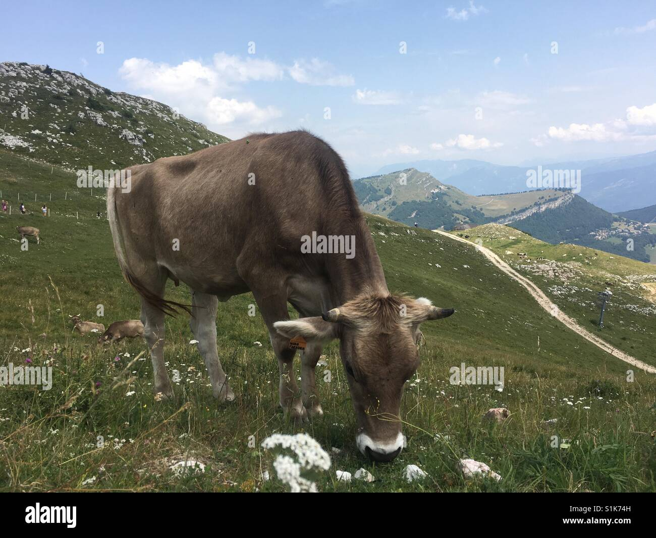 Cow Mountains - Stock Image