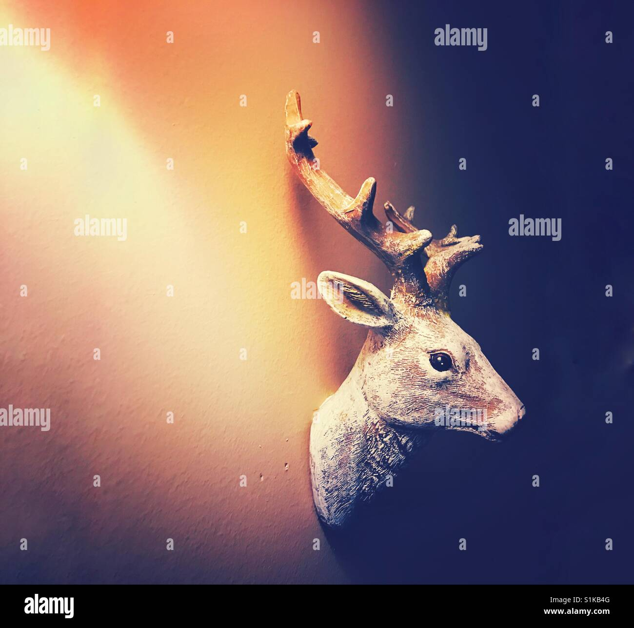 Stag Head Wall Stock Photos & Stag Head Wall Stock Images - Alamy