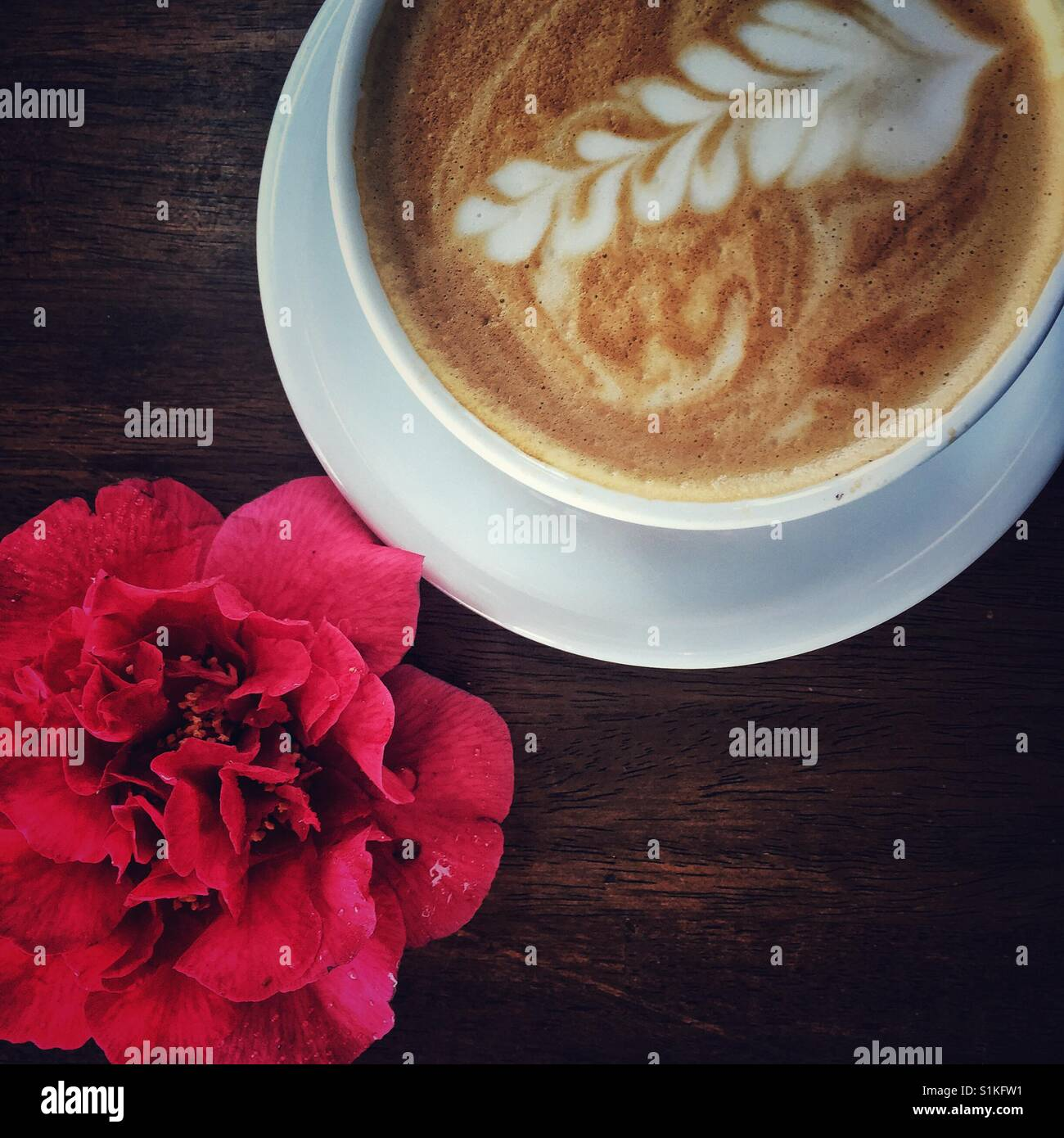 Cup of cappuccino with artsy design on the foam and camellia blossom on the table - Stock Image