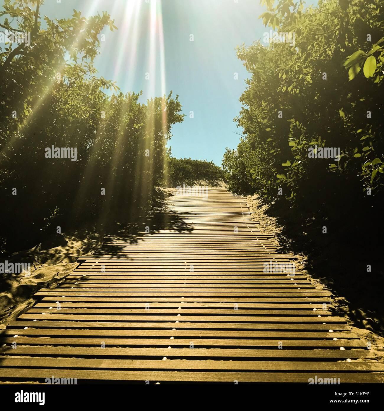 Sunshine on nature path - Stock Image