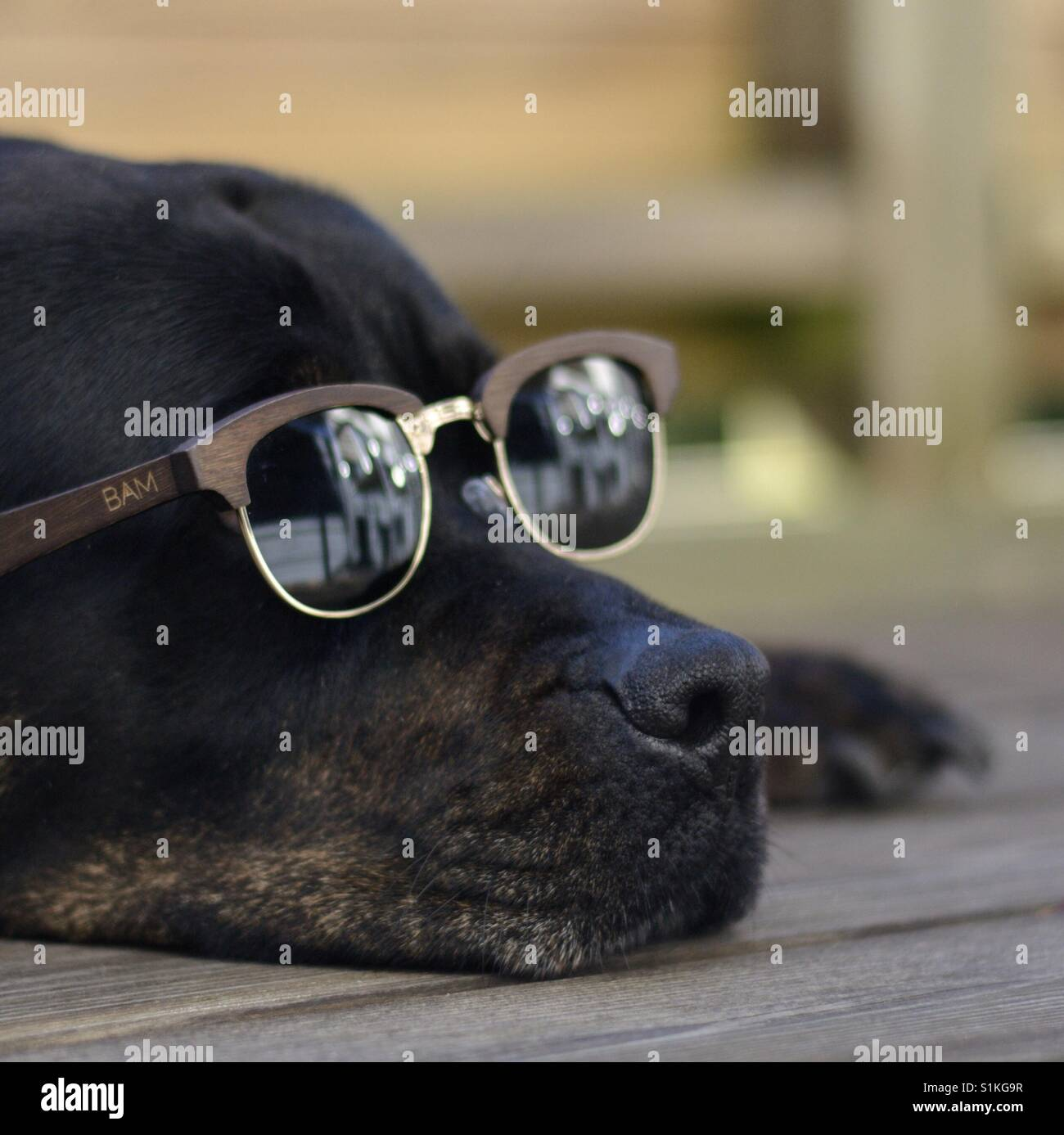 Lazy days in the sun. - Stock Image