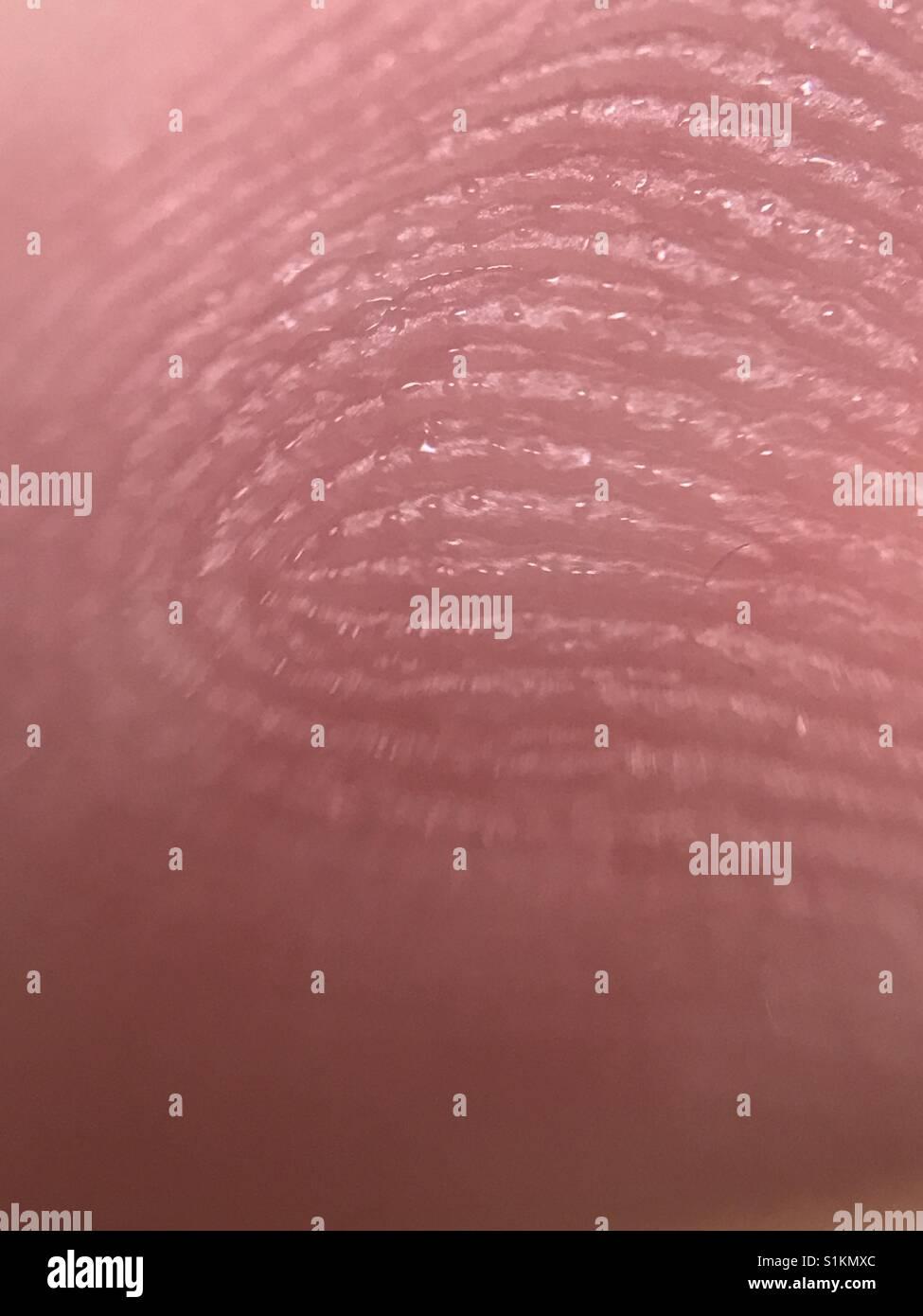 Fingerprint - Stock Image