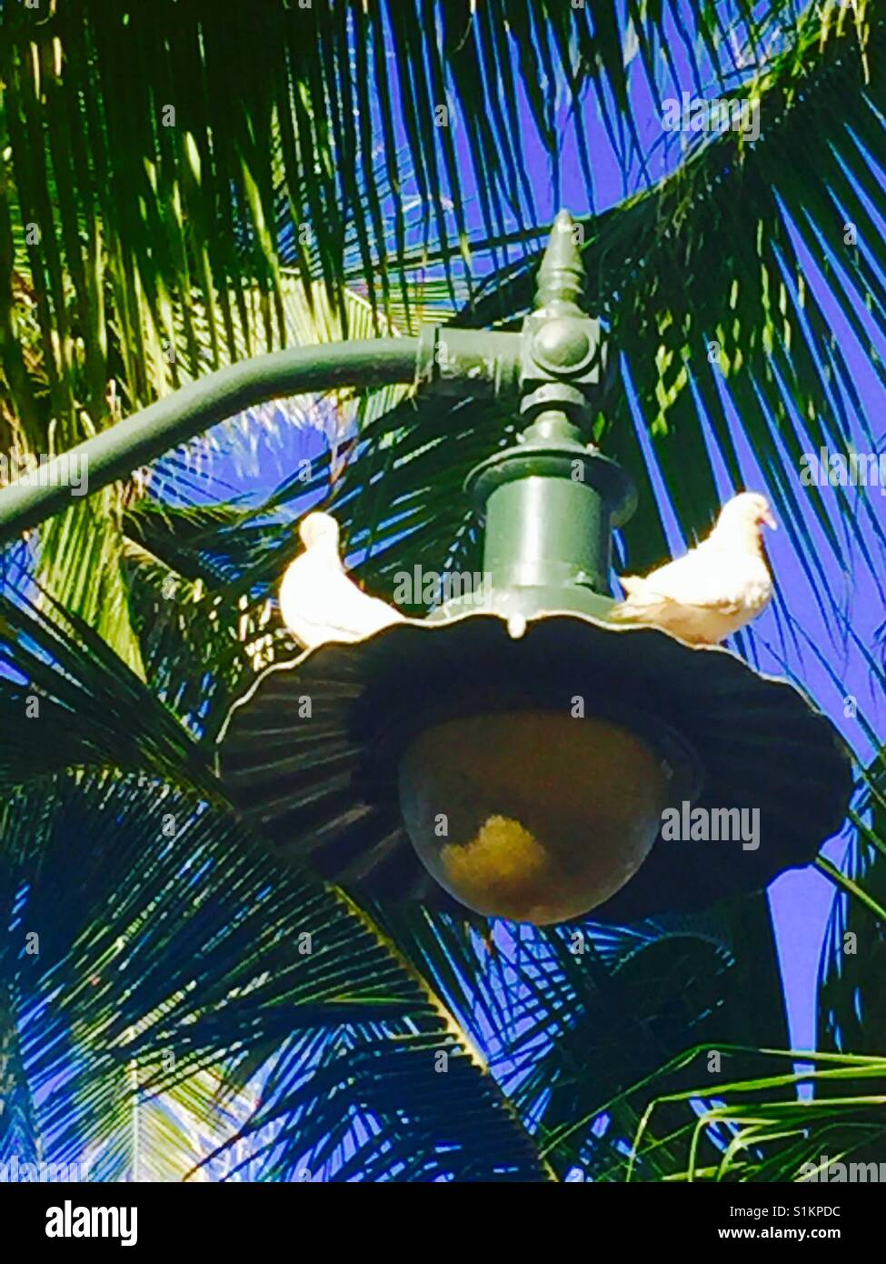 Two birds sitting atop a lamppost with palm fronds in the background - Stock Image