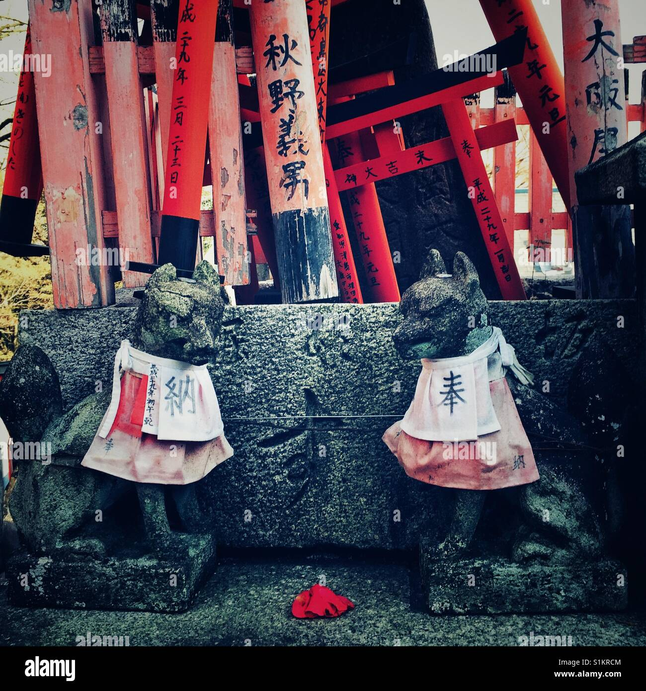 Two stone carved foxes in aprons guard torii gates at Fushimi Inari in Kyoto - Stock Image