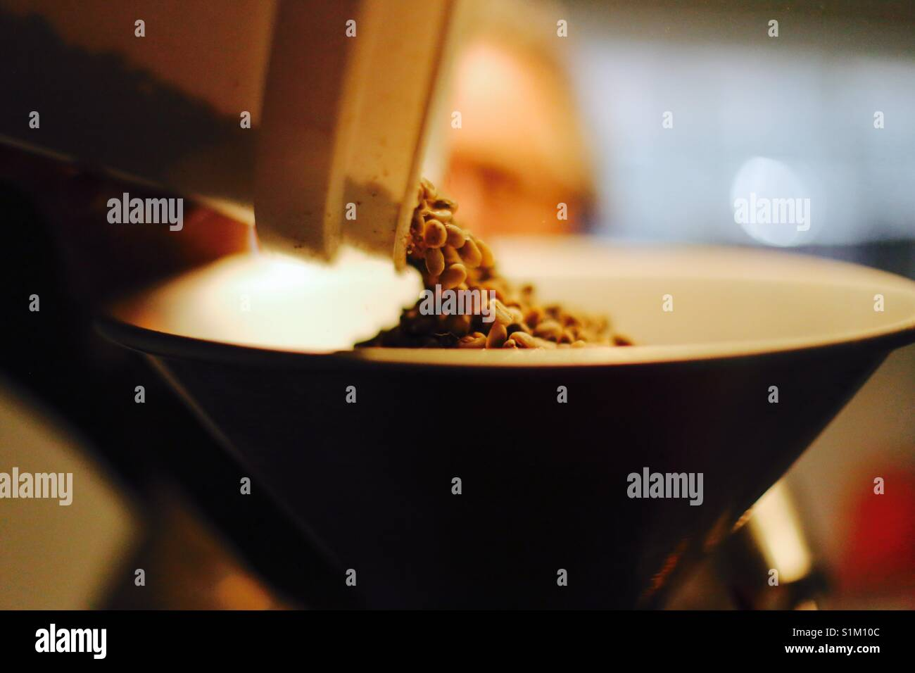 A coffee roaster loads green coffee beans into his roaster - Stock Image