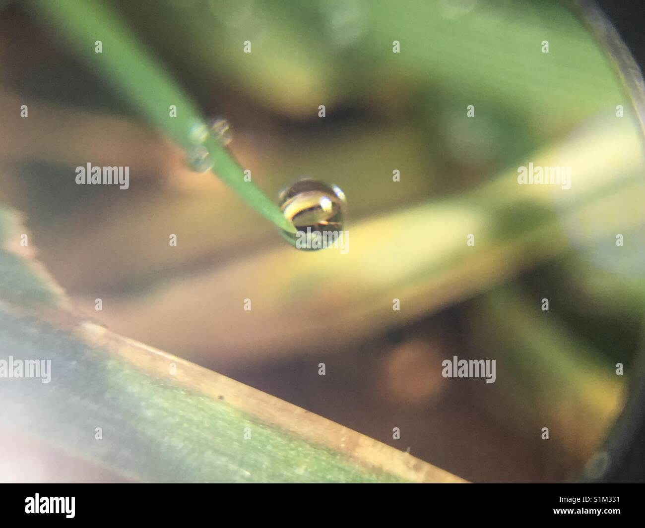 Droplet of water on a blade of grass - Stock Image