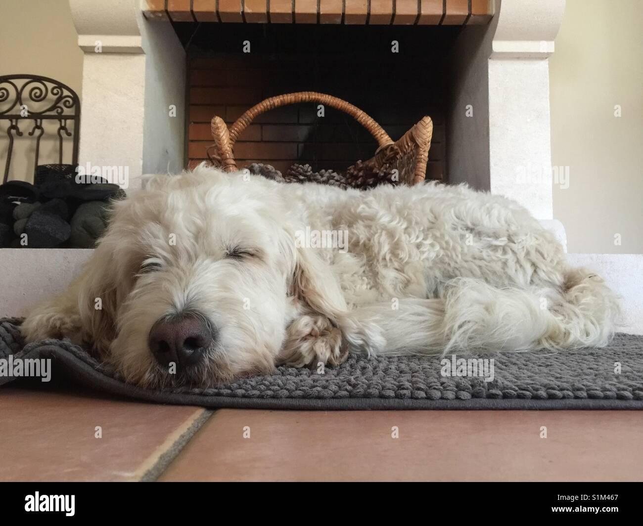 Weisser Hund Goldendoodle schläft vorm offenen Kamin. White dog, goldendoodle, doodle, sleeping in front of - Stock Image