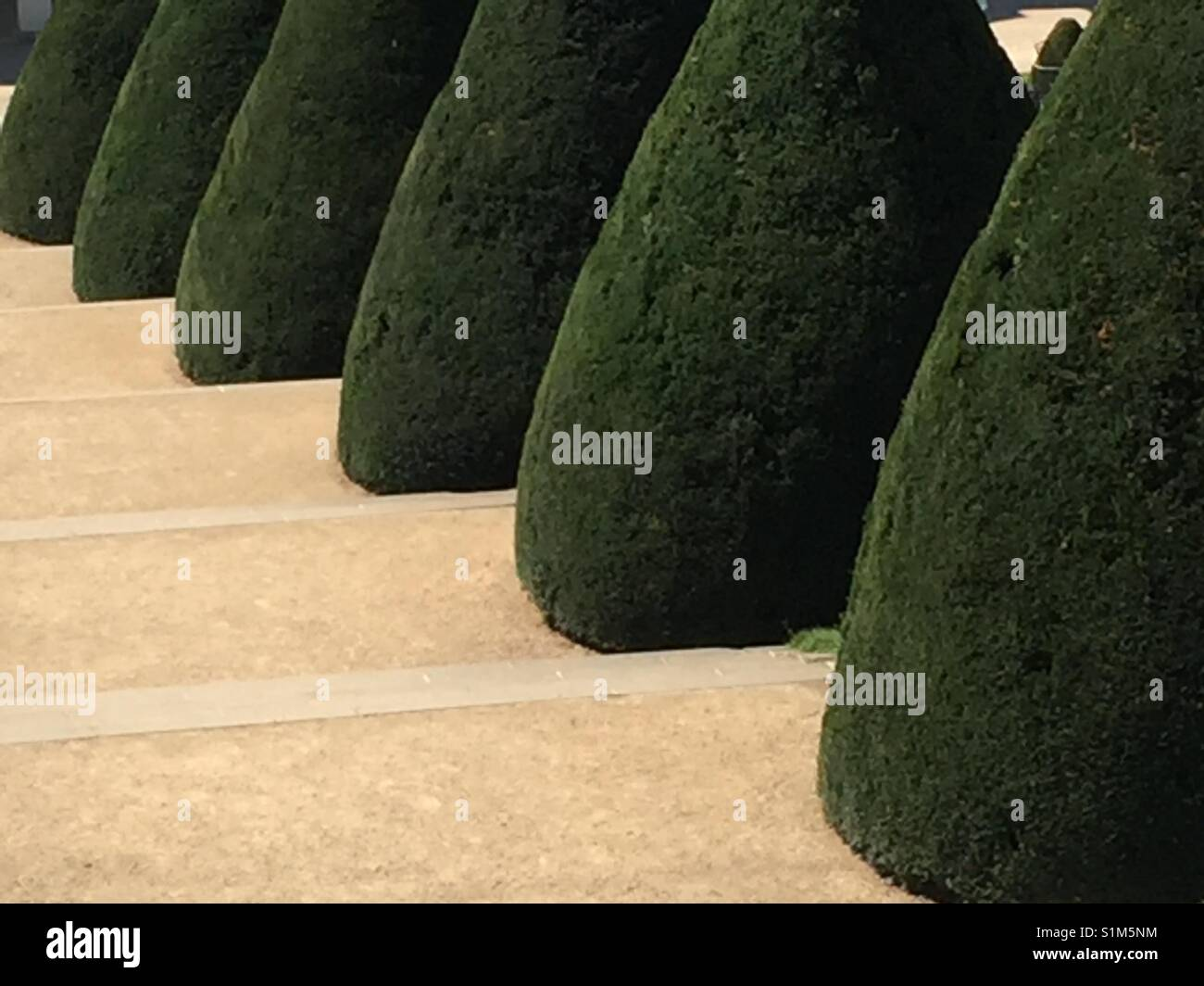 Green topiary yew trees along sandy steps.  Grünes Topiari entlang sandige Treppen. - Stock Image