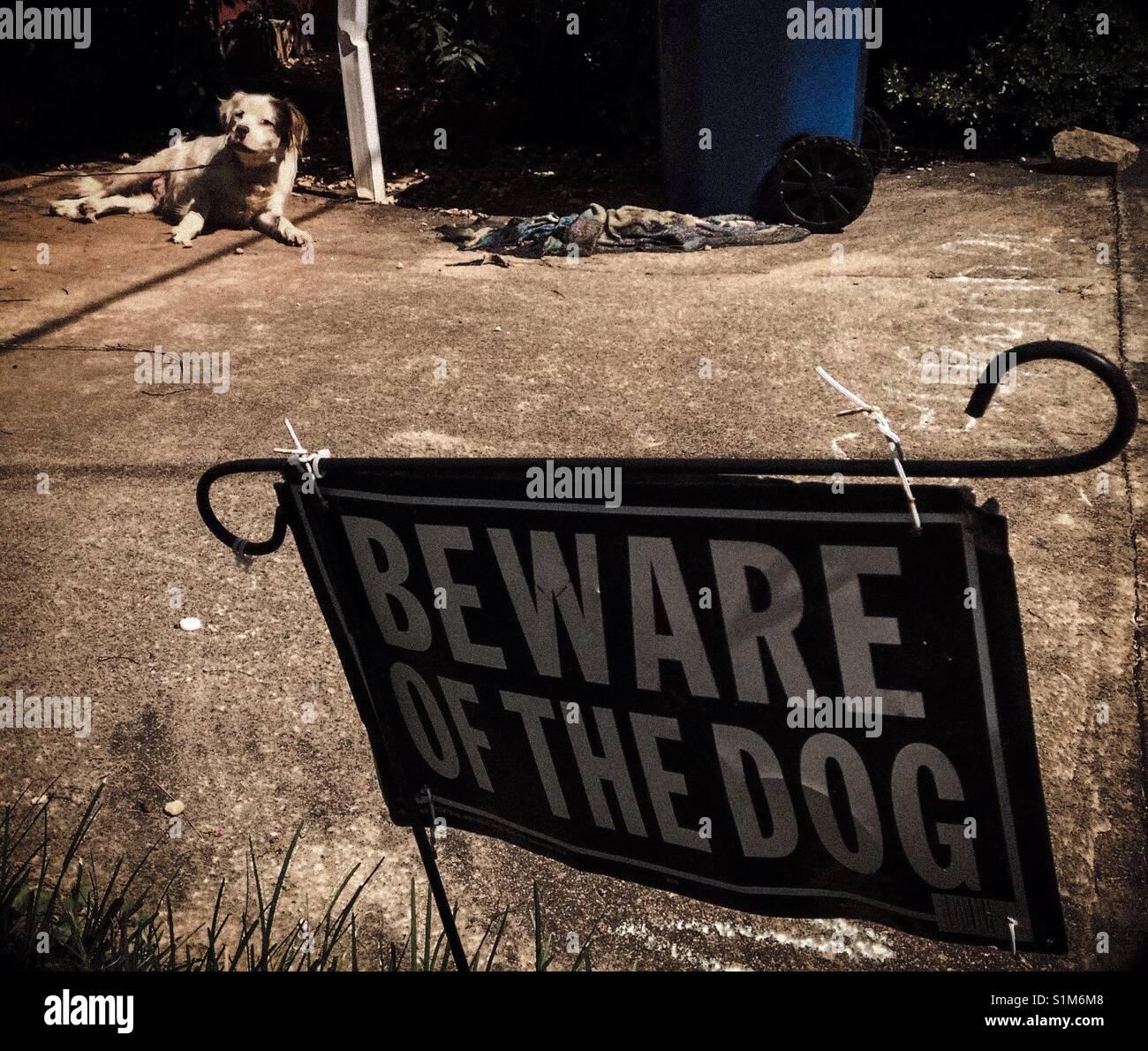 Awakened dog eyes photographer behind Beware of Dog sign - Stock Image