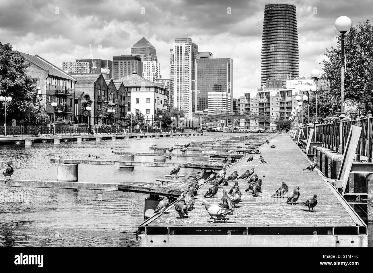 Pigeons on a jetty at the Docklands with the skyscrapers of Canary Wharf in the background, London - Stock Image