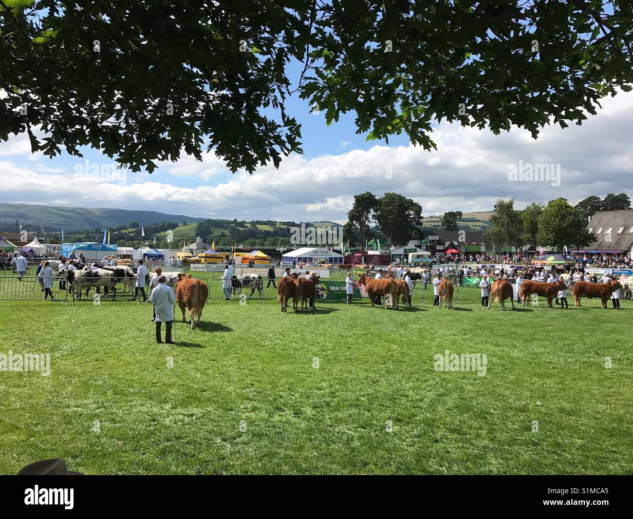 Royal Welsh Show, Builth Wells, Wales - August 2017: Judging of the cattle competition underway in the ring Stock Photo