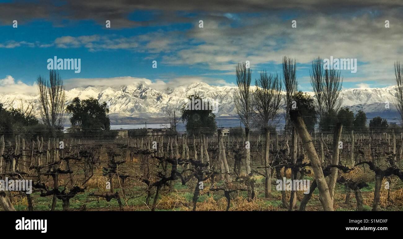 Vineyards in Lujan de Cuyo, Mendoza, Argentina - Stock Image