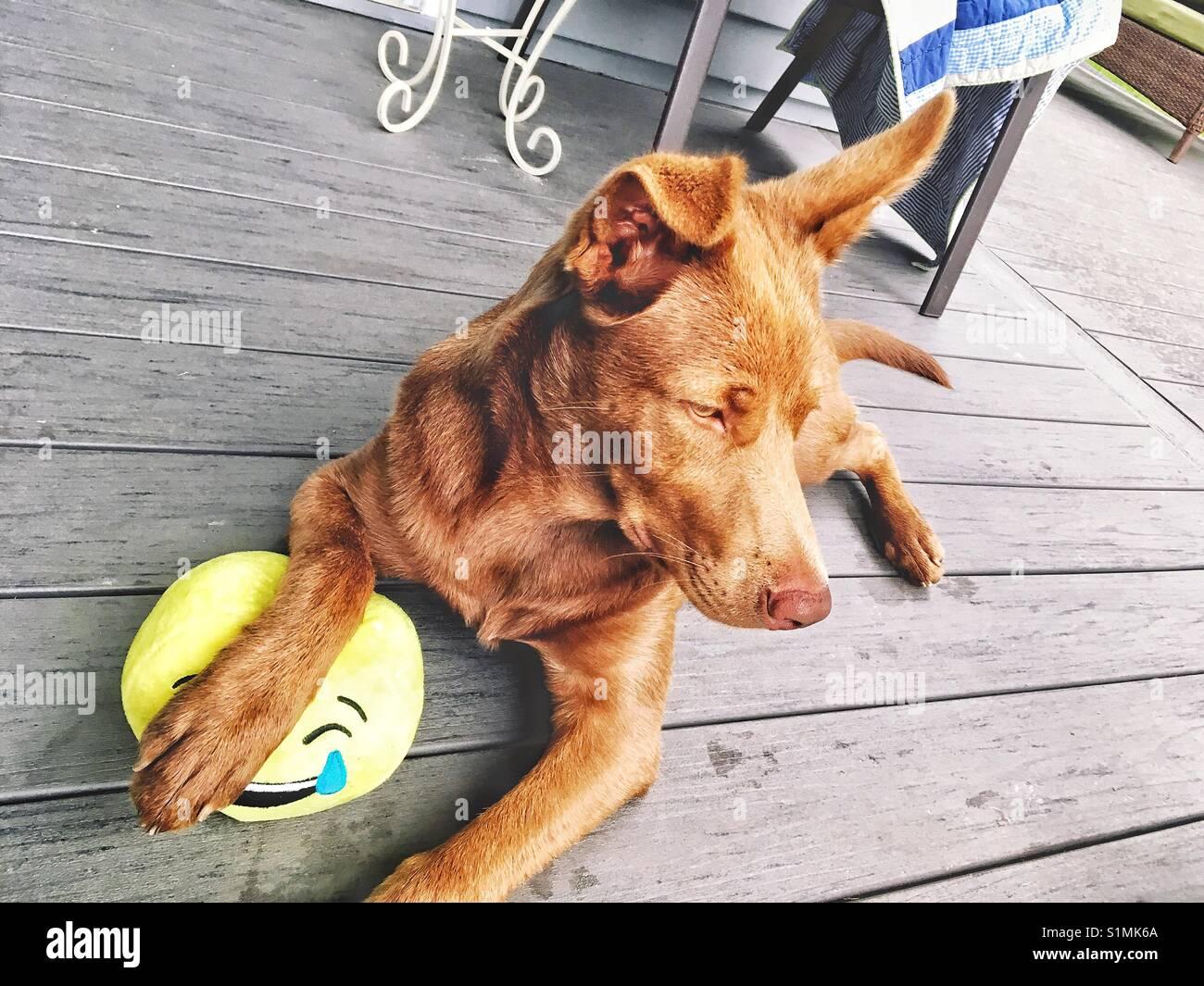 Dog at the porch - Stock Image