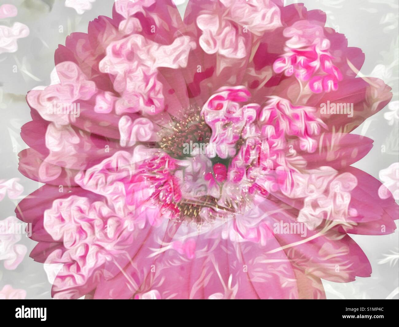 Two flower images blended to make beautiful abstract vintage look - Stock Image