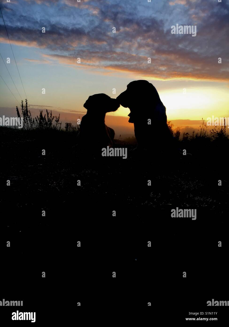 Silhouette of two dogs at sunrise looking like they're kissing - Stock Image
