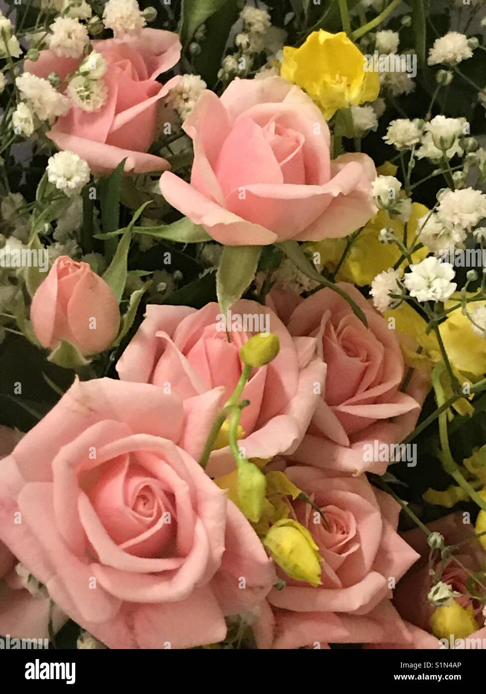 A bunch of roses - Stock Image
