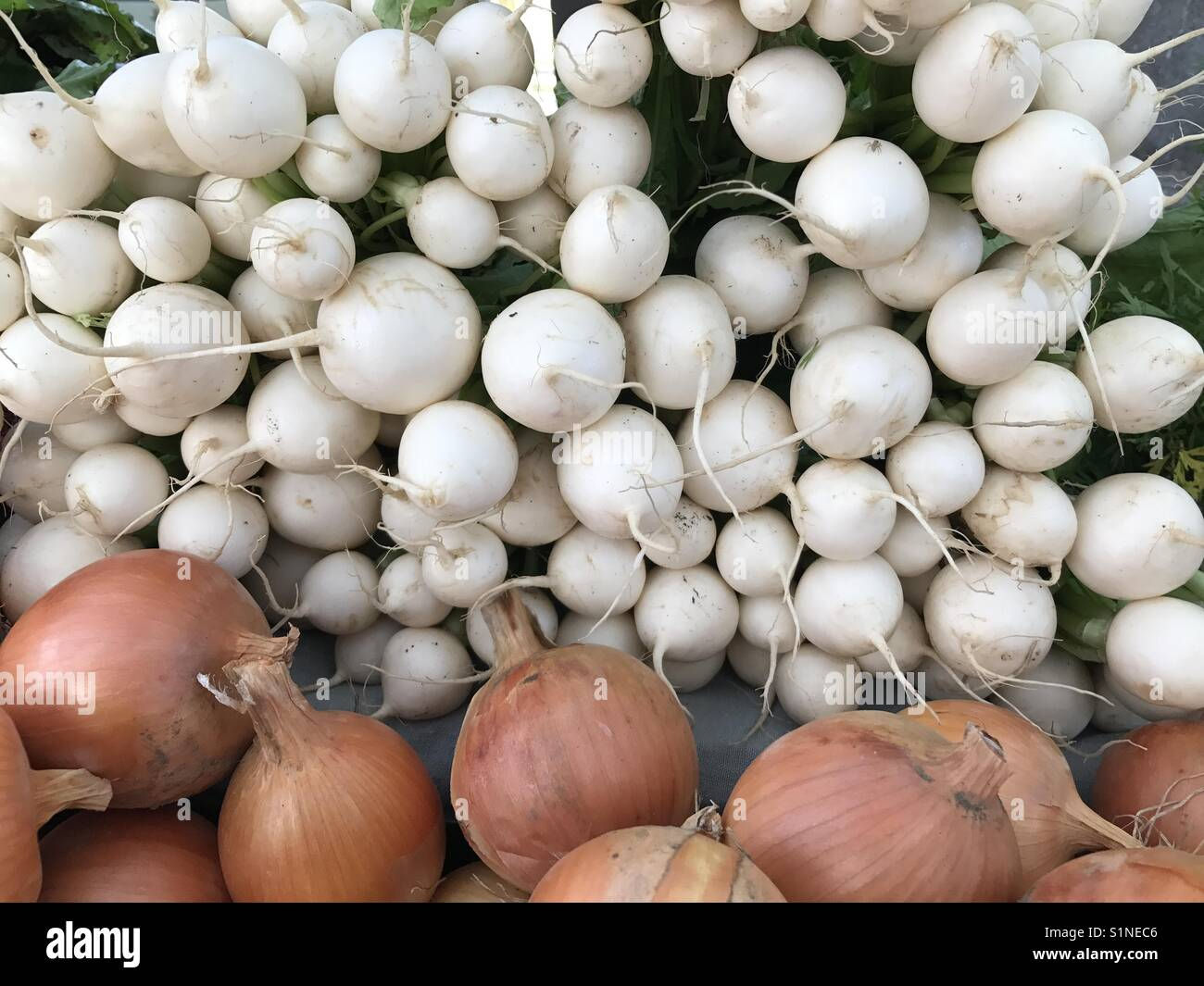 White radishes and yellow onions - Stock Image