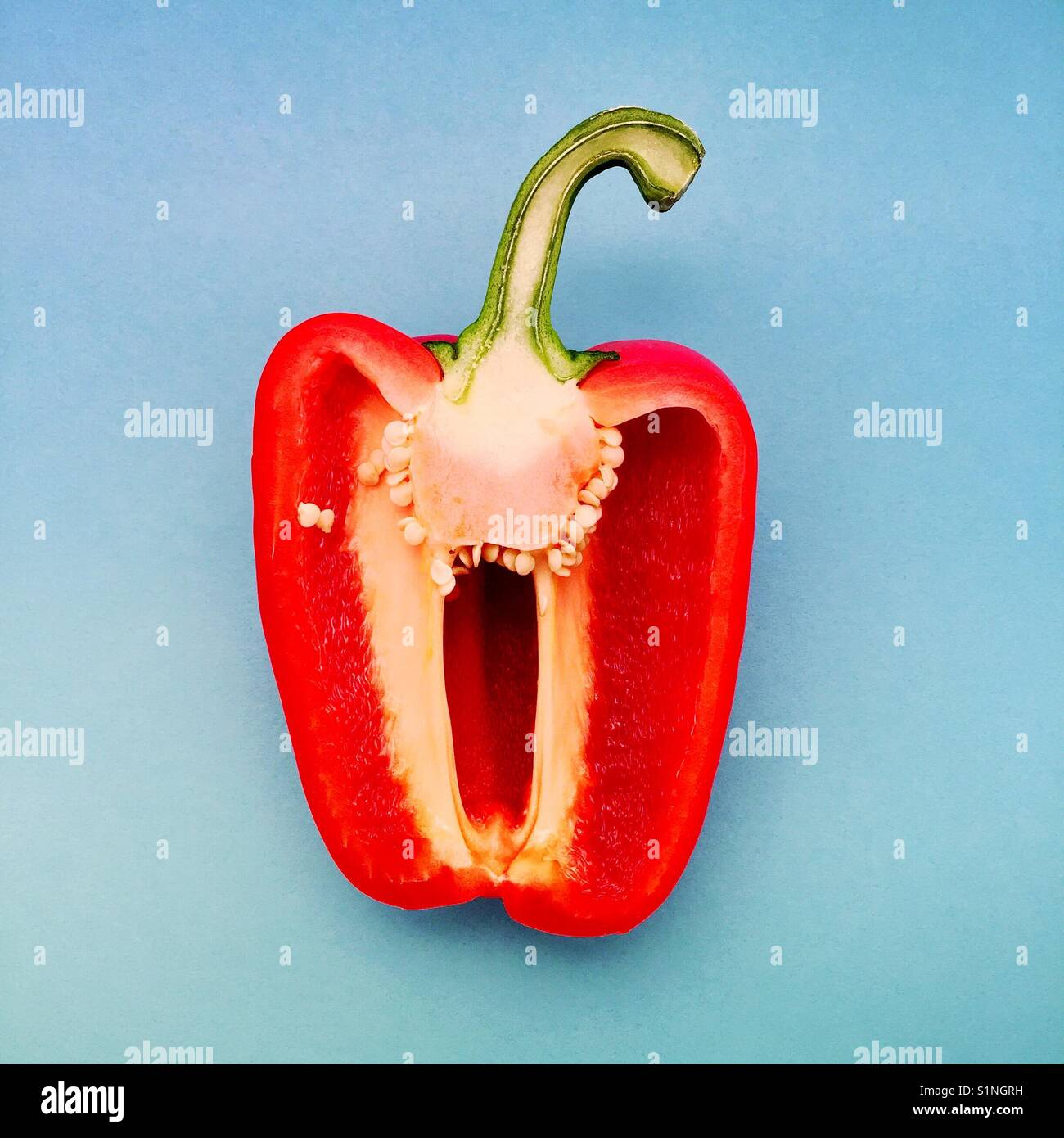 An overhead detail shot of half a red pepper centred on a blue background - Stock Image