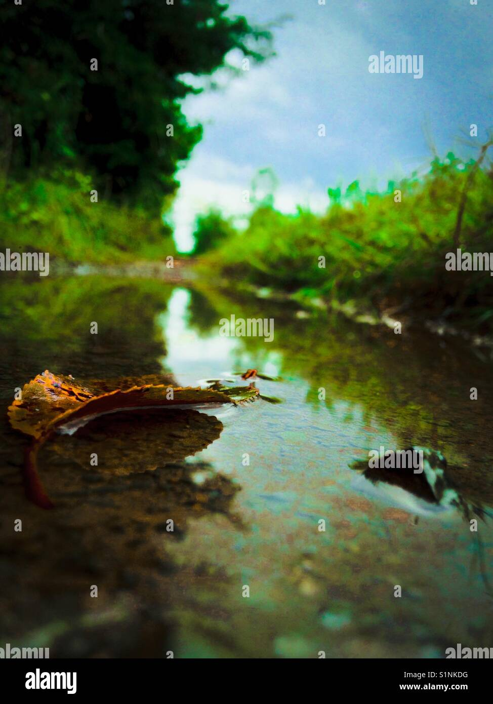 Blue-green photo of water puddle in lane after rain storm Stock Photo