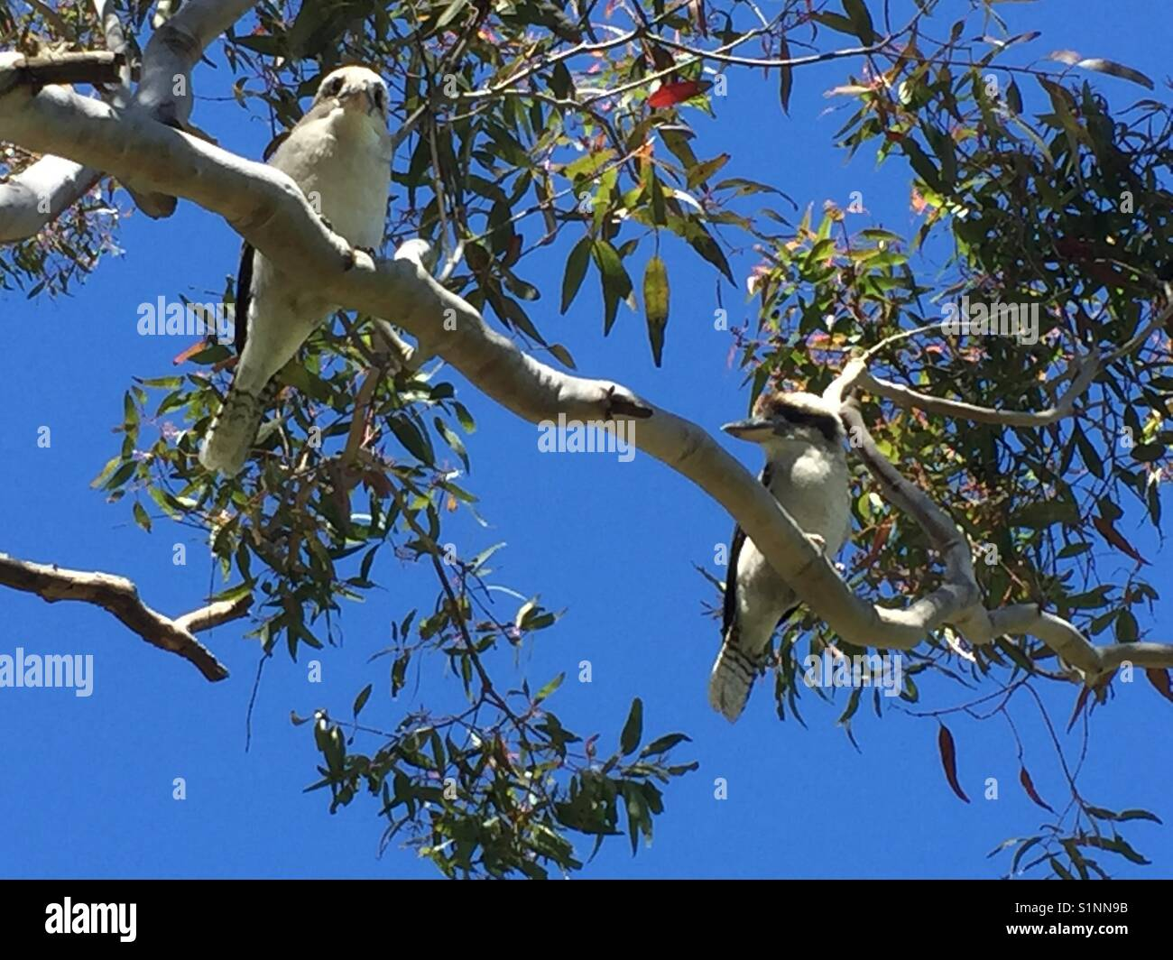 Two birds sitting in a tree - Stock Image