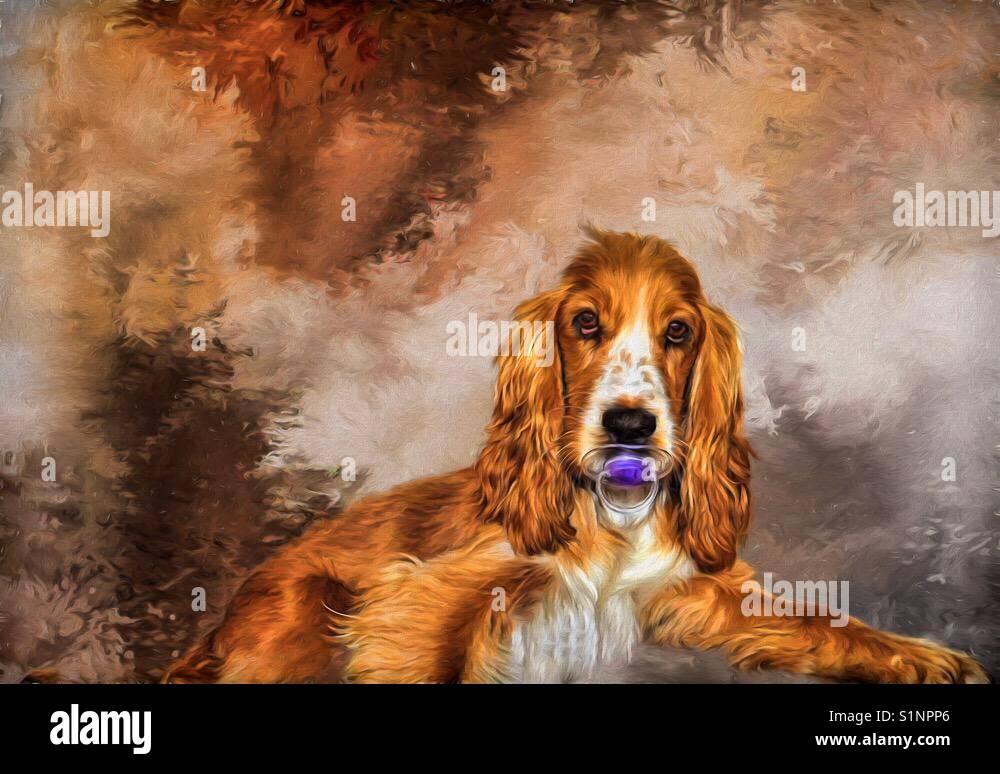 Dog with dummy - Stock Image
