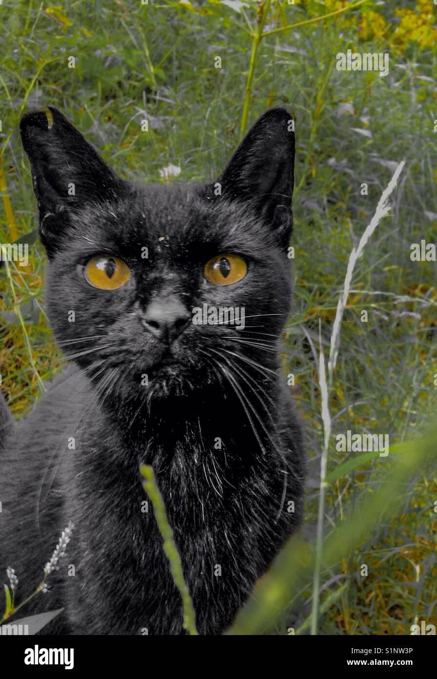 Inquisitive cat - Stock Image
