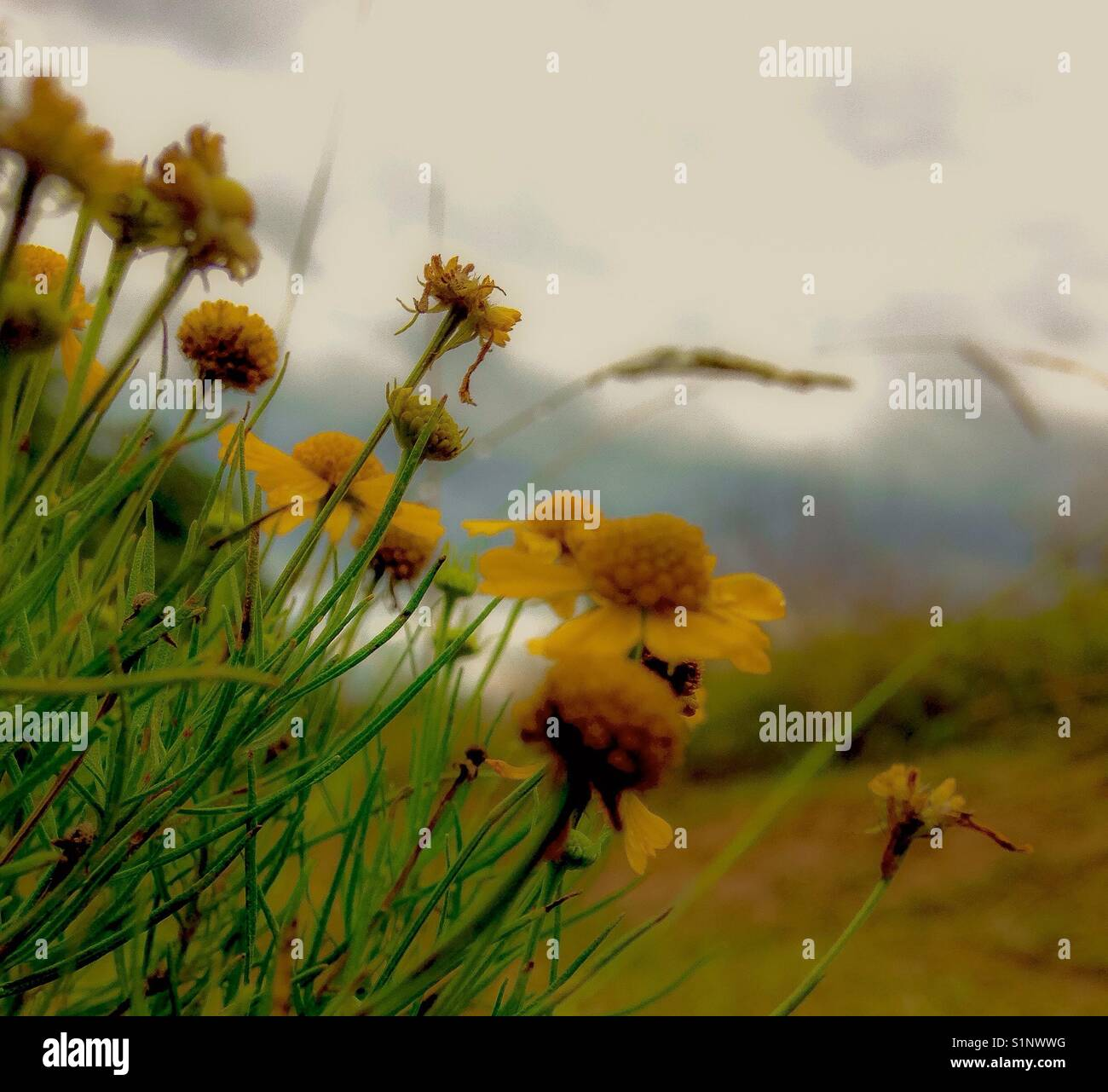 Wistful wildflowers in morning light - Stock Image