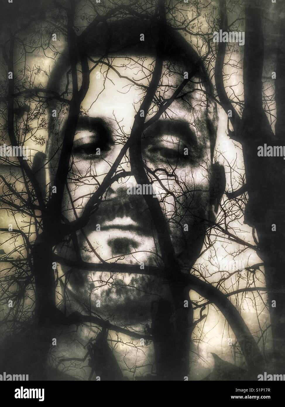 Multi exposure conceptual of an adult males face behind gnarled tree branches. - Stock Image