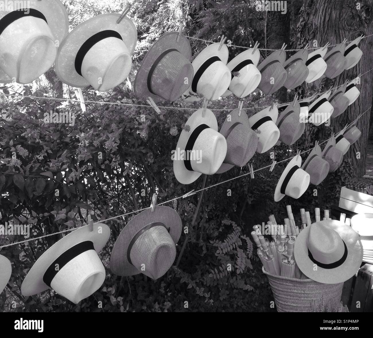 Panama hats hung in a line - Stock Image