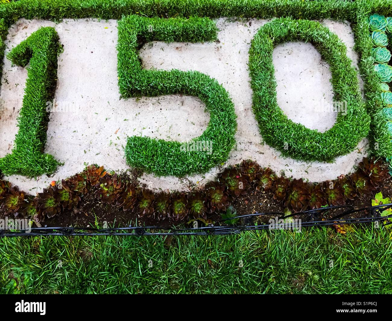 150 in topiary - Stock Image
