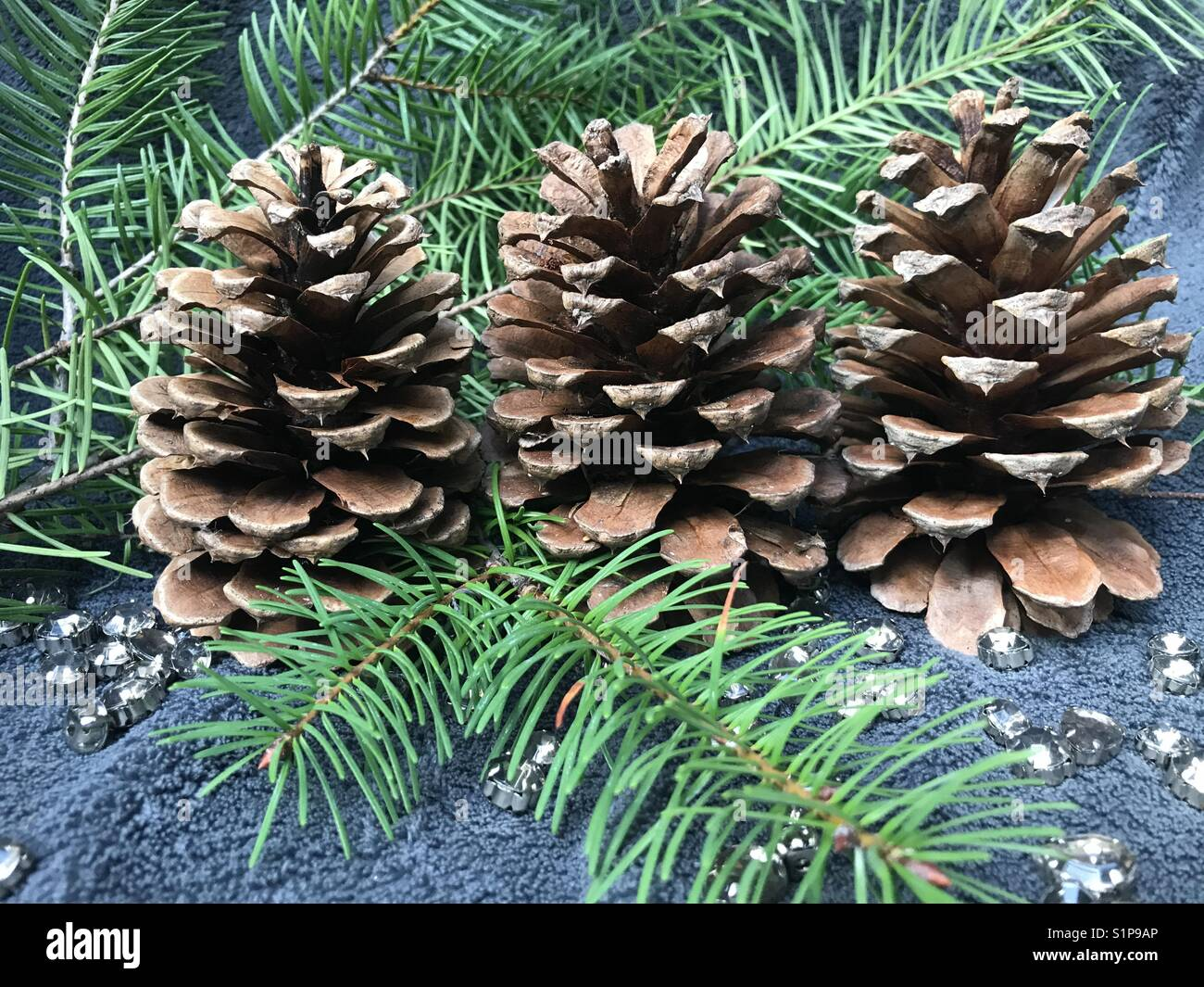 Holiday Pinecones - Stock Image