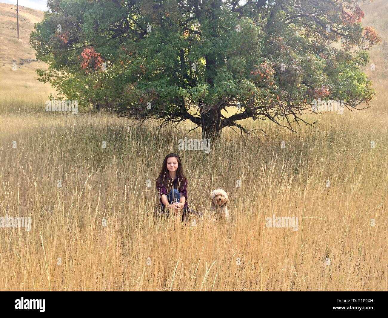 A girl and her goldendoodle puppy sit in a field by a tree with colorful leaves in Salt Lake City, Utah. - Stock Image
