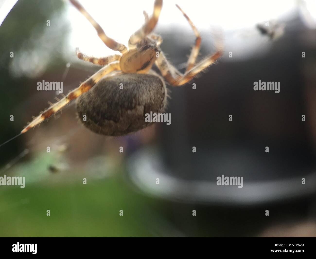Arachnid predator - Stock Image