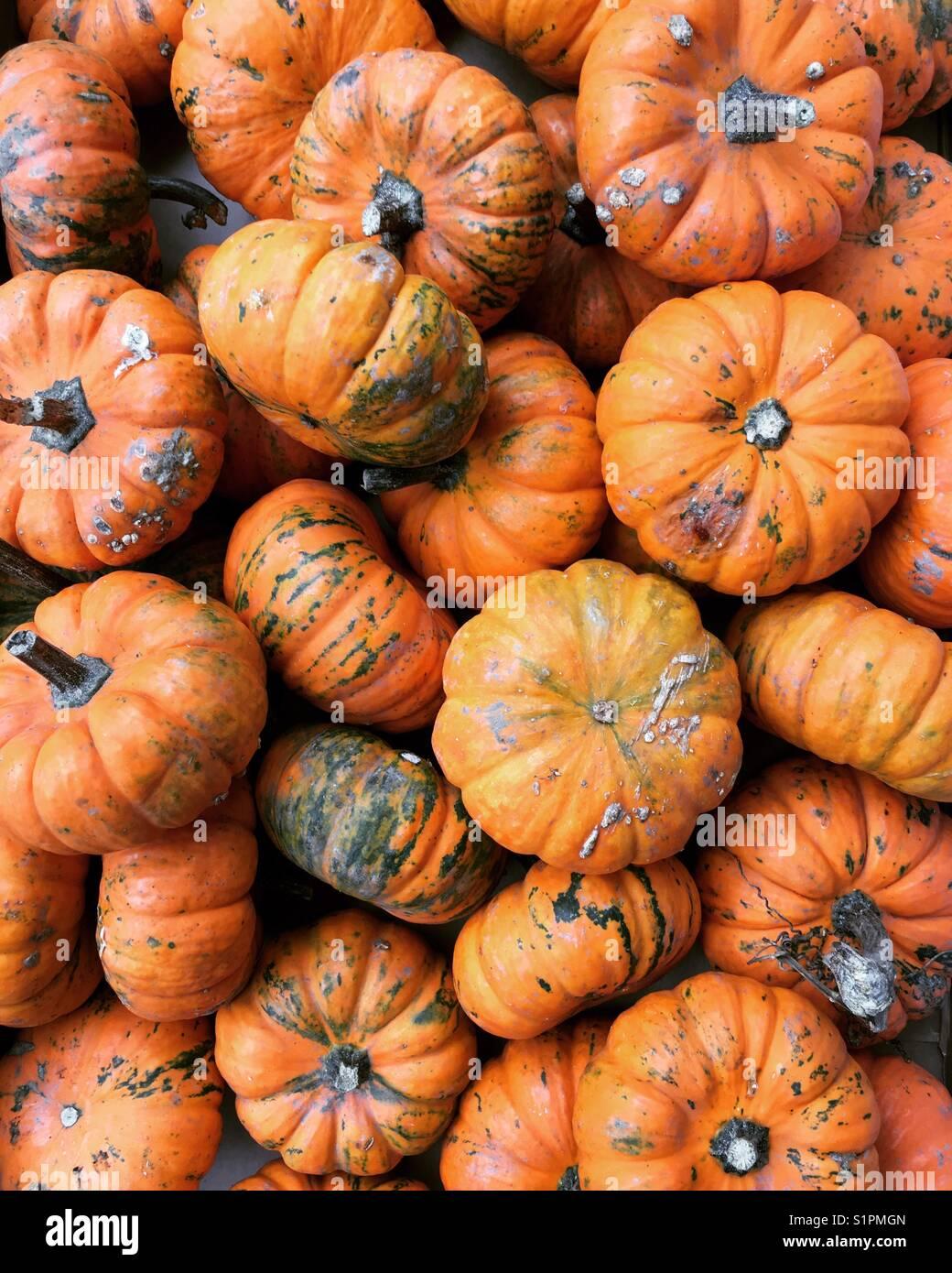 Baby pumpkins - Stock Image