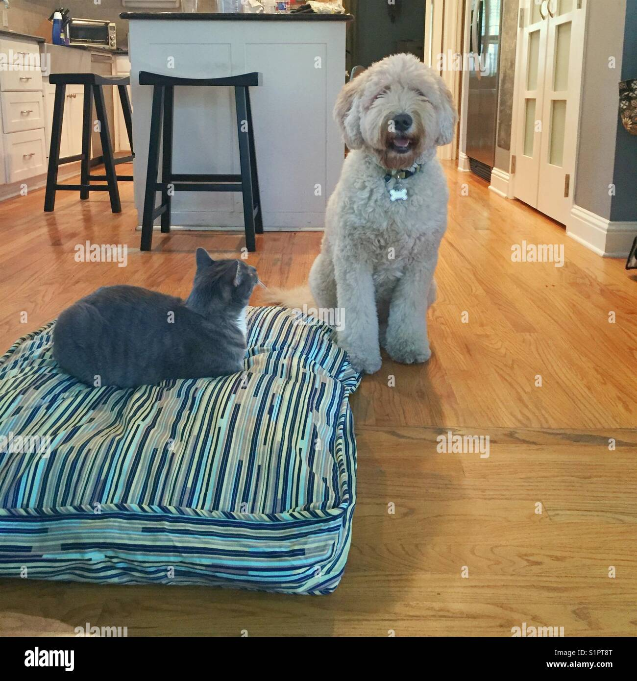 Cat takes over dog bed. - Stock Image