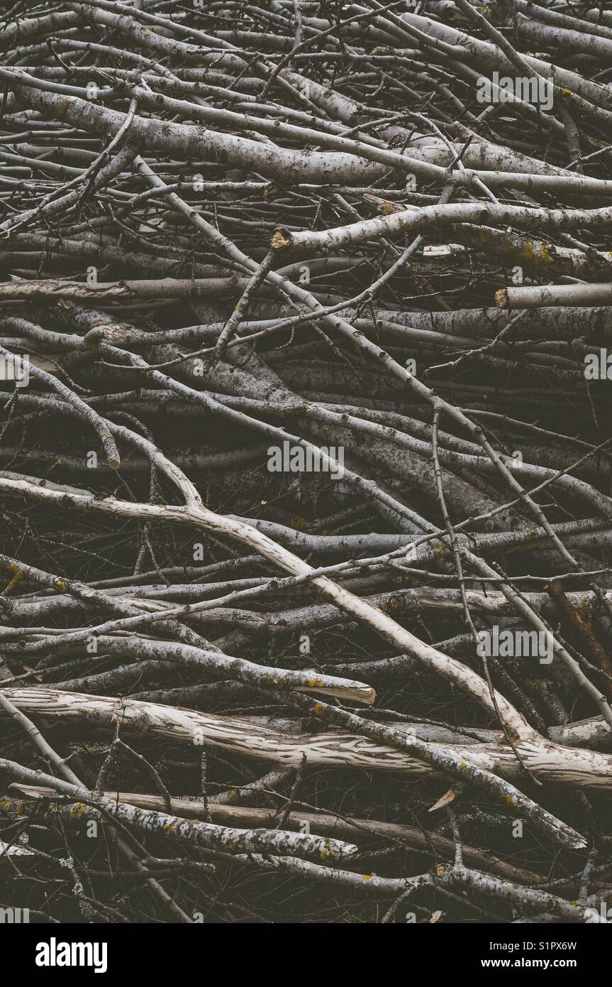 Cut branches. Textured, abstract photography. - Stock Image