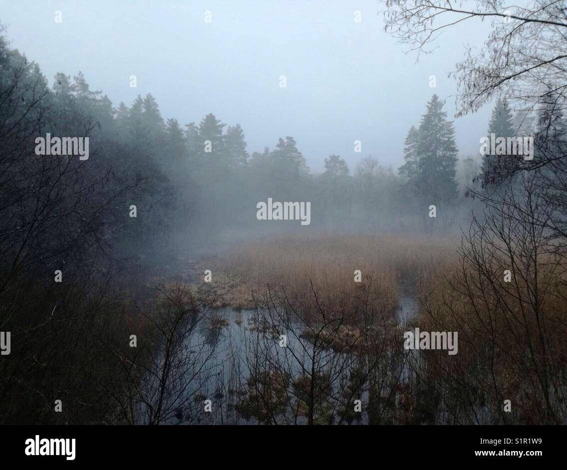 Foggy autumns morning. - Stock Image