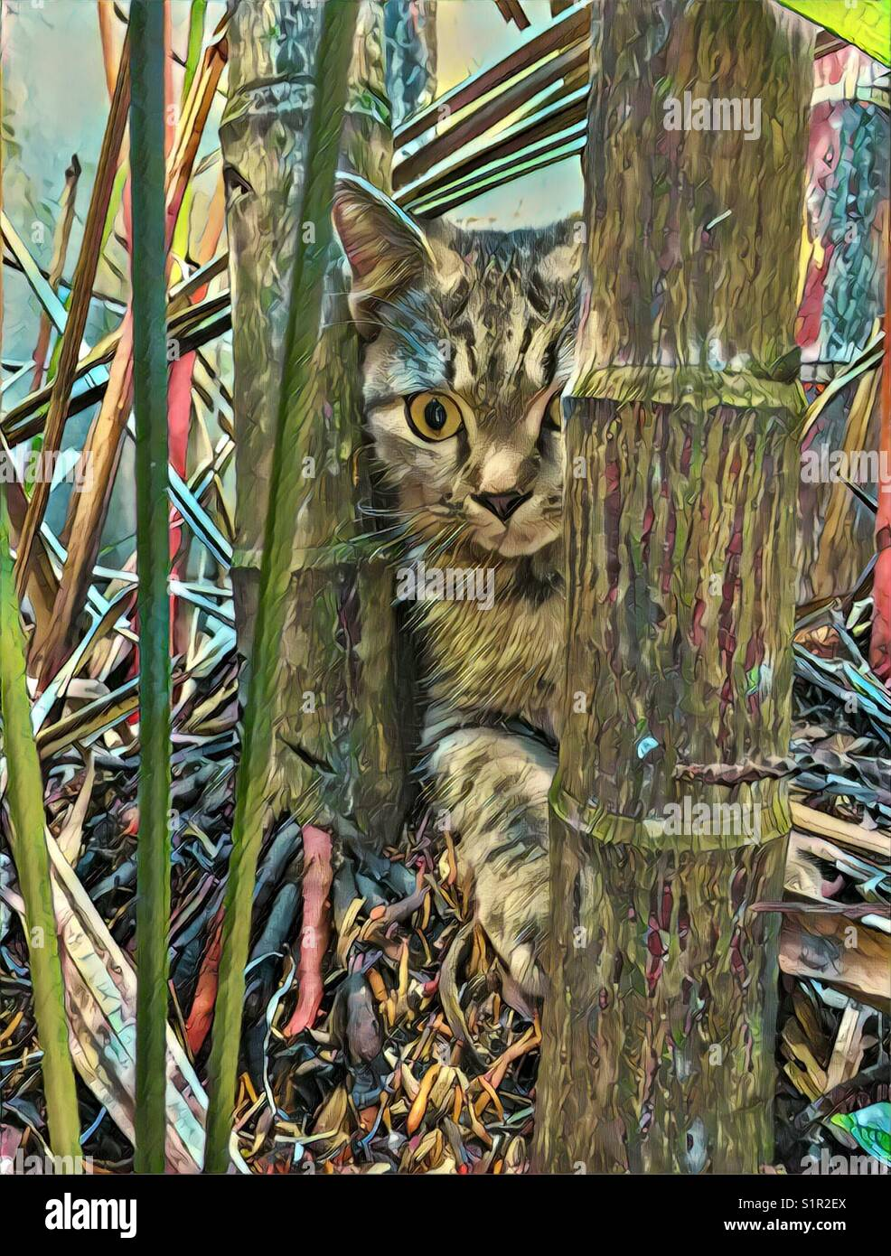 My cat hide in bush watching me, took a snap and edited it - Stock Image