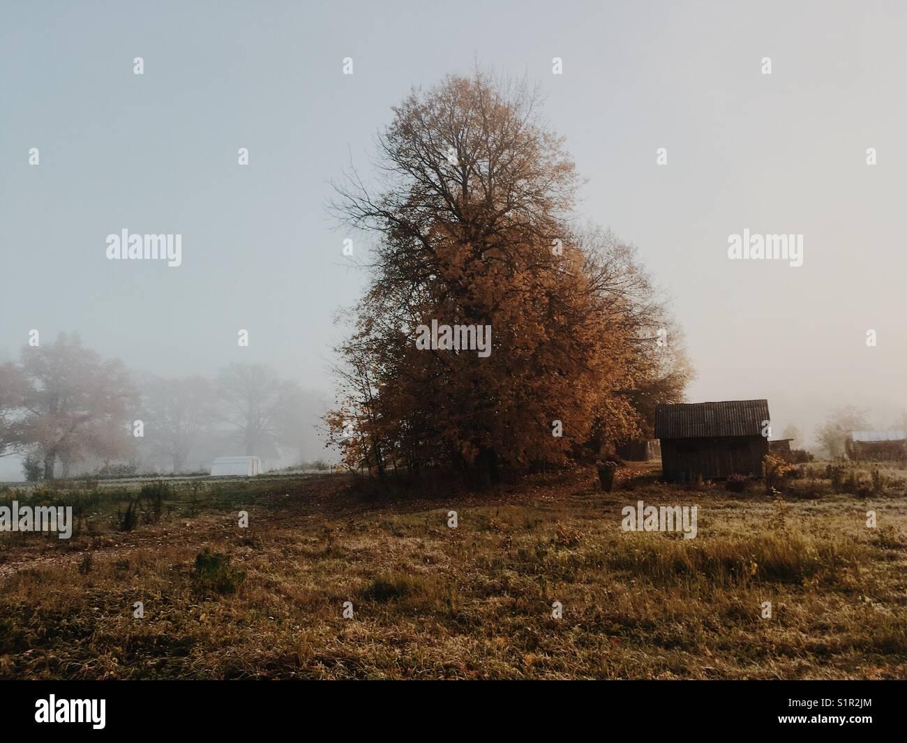 Autumn. Beautiful foggy landscape. - Stock Image