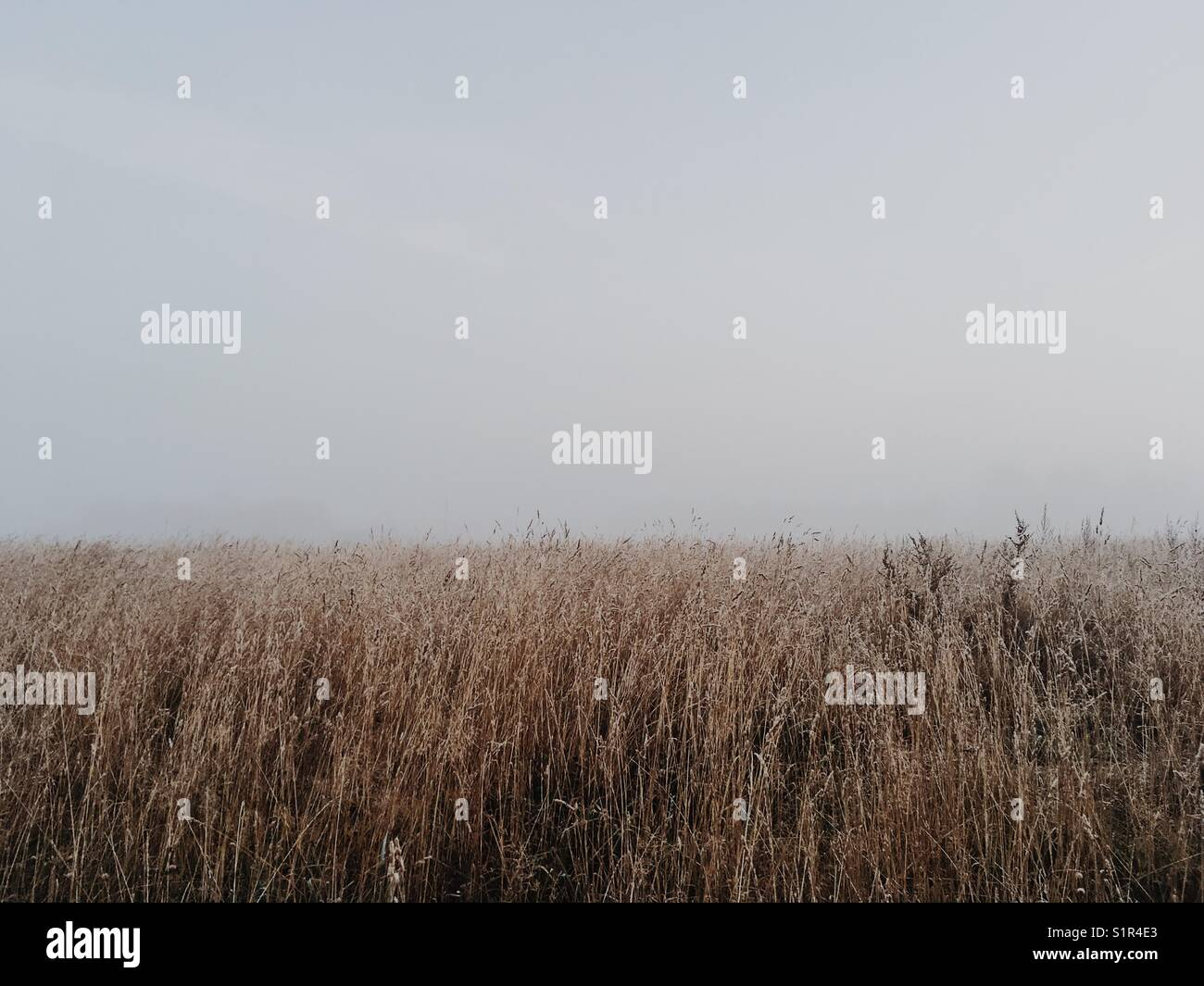 Grass field in foggy morning. - Stock Image
